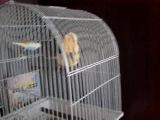 мой попугай-рокер;D